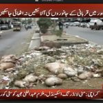 More than 43,000 tonne waste disposed of on Eid
