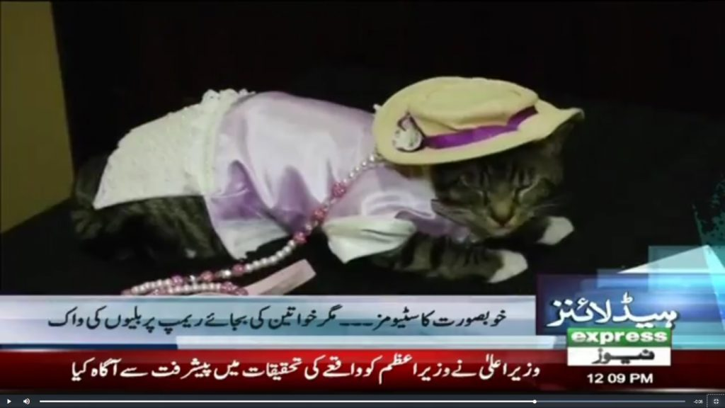 Cats get glammed up for the Algonquin Cat Fashion show