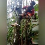 An easy way to climb a tree