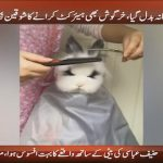 Rabbit gets a cool and funky haircut