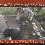 Amazingly beautiful pair of Lion finally comes back to Karachi