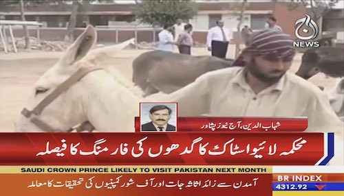KPK government to start donkey farming