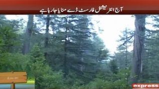 International Forest Day celebrated today