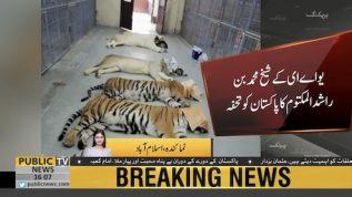 UAE Sheikh Mohammed Bin Rashid gifts 4 white tigers, 6 Bengali tigers lions to Pak
