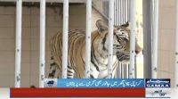 Hot temperature affecting animals in Karachi Zoo