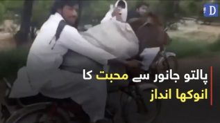 Showing affection to animals by giving a ride