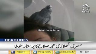 Fan parrot sings for Mo Salah