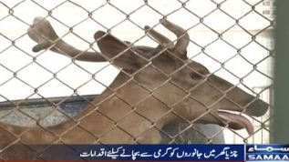 Heatwave scorching the Karachi Zoo