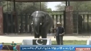 Queen elephant predicts India Pakistan match result