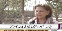 Zeba runs an animal shelter in Peshawar
