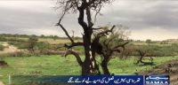 Nagarparker: The desert welcomes heavy rains