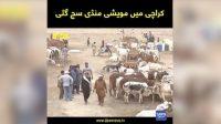Eid-ul-Azha preparations begin in Karachi