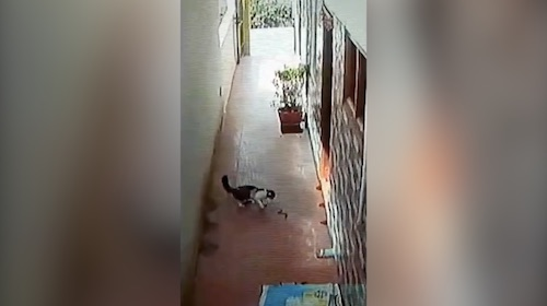 India: Cat uses one of its nine lives