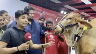 Cow sold for Rs 1 million