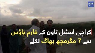 Seven Crocodiles escape from farm house in Karachi's Steel Town