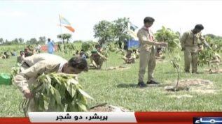 Plant for Pakistan campaign