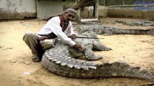 The crocodiles of Manghopir