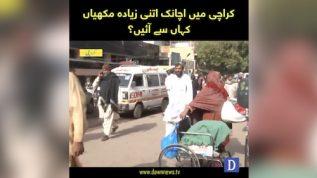 Karachi mein ziada makhiyon kay aani ki waja kya hai