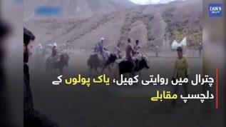 Chitral mein riwayati khel yak polo kay dilchasp muqablay