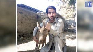 Gilgit mai nojawano nay Markhor ka bacha kutton say bacha lia