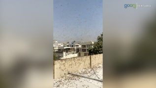 Karachi kay mukhtalif Ilaqo main Tiddi ka hamla