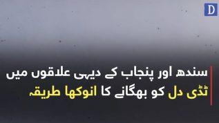 Sindh or Punjab kay dehi elaqon mai tiddi dal ko bhagany ka anokha tareeqa