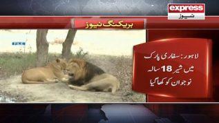 Lahore: Safari park mein sher 18 saal ka nojawan kha gia